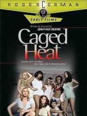 Affiche : Caged Heat
